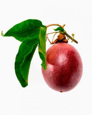 passion fruit kiyoshi togashi